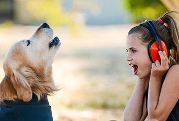 У соседей постоянно лает собака - что делать?