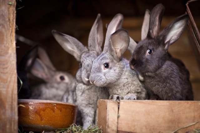 Может ли судебный пристав забрать домашнее животное, если у меня больше ничего нет?