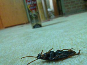 Соседи развели тараканов и клопов - как их наказать и куда жаловаться?